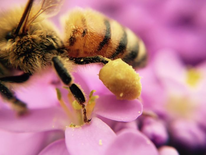 Busy bumblebee Extreme Close-up
