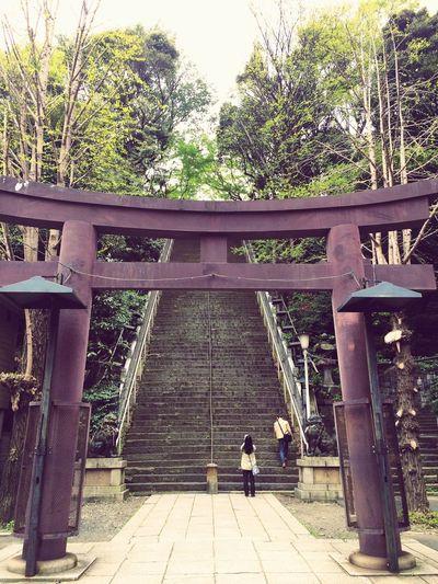 Stairs of Progression Shrine 愛宕神社 出世の階段
