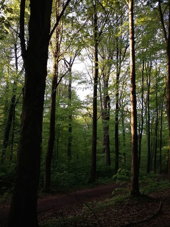 Varel Forest in Spring. · Germany Vareler Wald Wald Waldspaziergang Trees Hugging A Tree Forest Forest Photography Forestwalk Green Sun Light And Shadow Silhouette Springtime Great Day