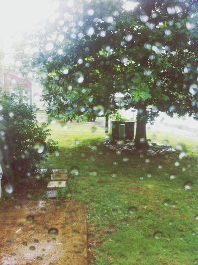 Nature As The Rain Falls