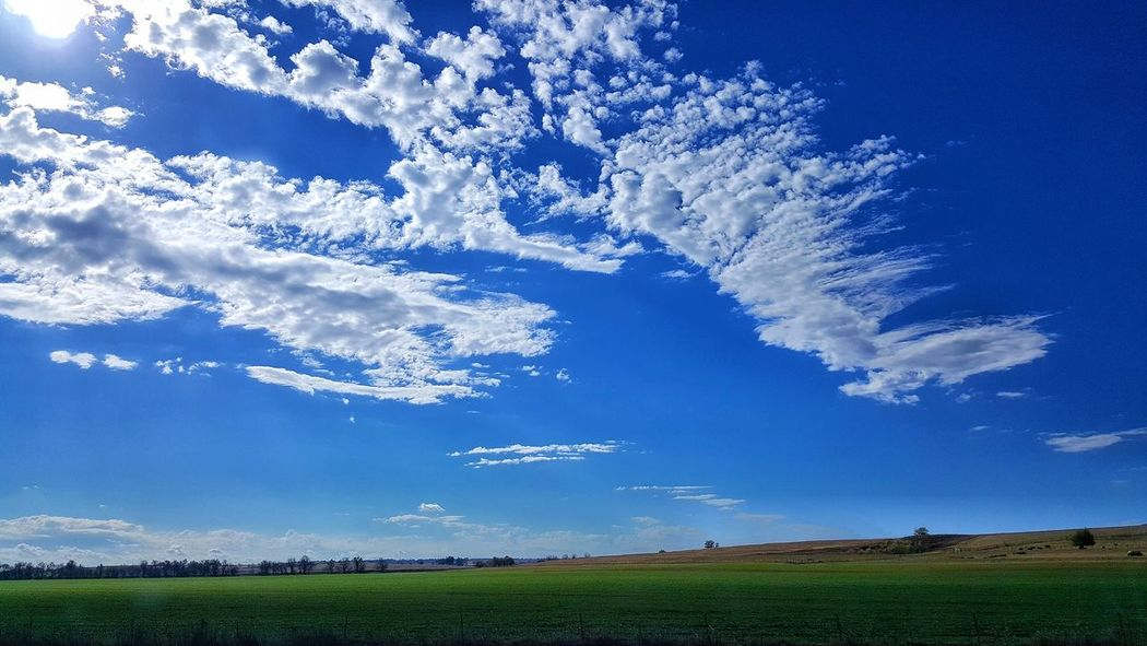 Blue Sky Nature Cloud - Sky Growth Scenics No People Rural Scene Grass Beauty In Nature Outdoors Landscape Tranquil Scene Tree Day Finding New Frontiers