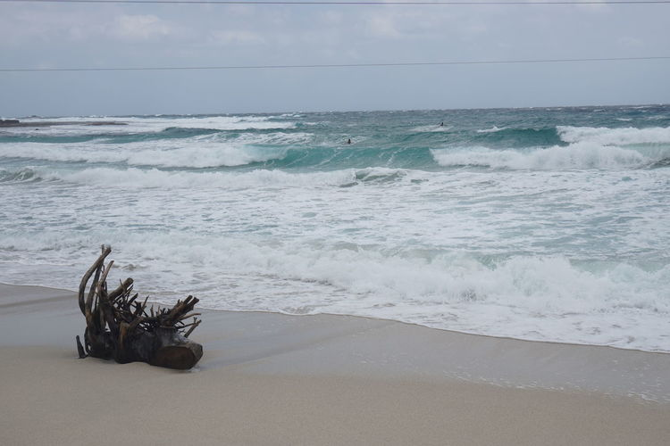 Beach Beach No Peaple Beauty In Nature Drift Wood On Beach Drifwood Fine Beach Sand Horizon Over Water Sand Sea Shore Tranquility Wave