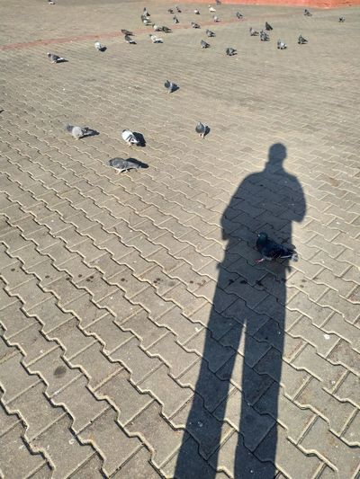 High angle view of shadow on beach
