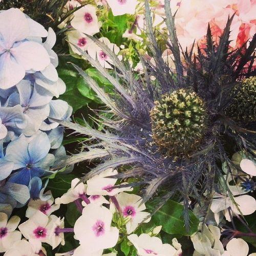 Lovely flowers Alea collection. Flores Vigo Aleafloristerias Flowers Alea Blue Azzurro Hydrangea Energyum Phlox Lovely