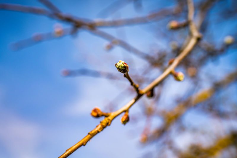 Low angle view of flowering plant on branch against sky