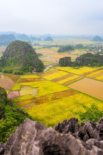 Landscape Environment Scenics - Nature Tranquil Scene Plant Beauty In Nature Tranquility Rural Scene Tree Agriculture No People Nature Land Sky Green Color Day Non-urban Scene Field Idyllic Farm Outdoors Rice Rice Paddy Mountain Viewpoint From Above  Vietnam Travel Travel Destinations Tam Coc