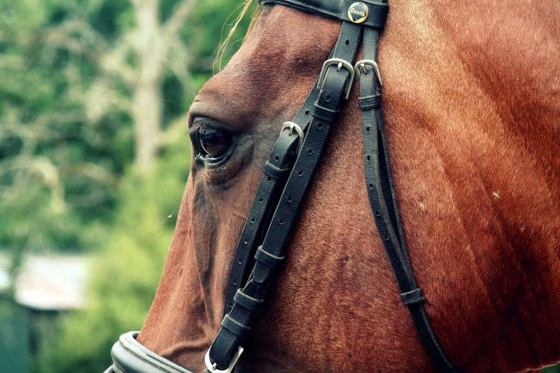 Pet Portraits Horse Photography  Horse Eyes Beautiful Best  Best Horse Competition Love Art Sun Color Art Picture Horse Photography  Best  Sport Pet Horse Riding