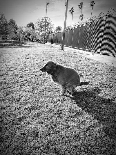 Dog Animal Themes One Animal Pets Domestic Animals Mammal Day