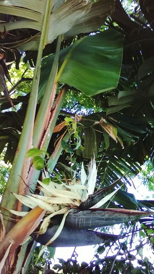 Tropical Plants Looking Up Photos Green Plants Growing Tall From My Point Of View Look Close Lots Of Greens Enjoy The Colors Summers Coming Plants And Trees Showcase : May Enjoying The View Plants Enjoy The Little Things