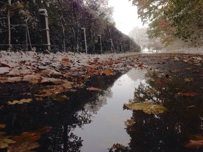 where autumn meets winter Water Nature Tree No People Scenics Reflection Tranquility Day Outdoors Beauty In Nature Beauty In Nature Plant