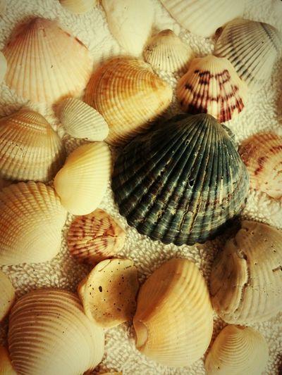 Shell hangout Sea Seaside Shells Shell Sea Shells Check This Out Enjoying Life Artbasik Florida Life Florida