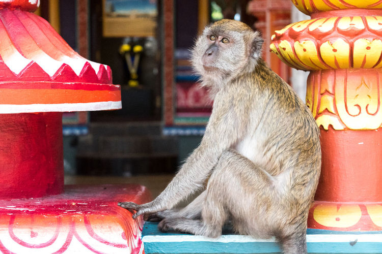 Close-up of monkey sitting on table