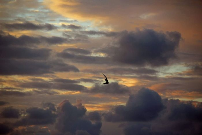 🌅☁🔝 Kite Sky Sunset Flying Dramatic Sky Outdoors Nature Beauty In Nature Scenery Landscape Cloud Stormy Northsea Sea Denmark Travel Trip Journey Adventure Colorful Traveling Exploring Beach Landscapes Traveler The Week On EyeEm Lost In The Landscape