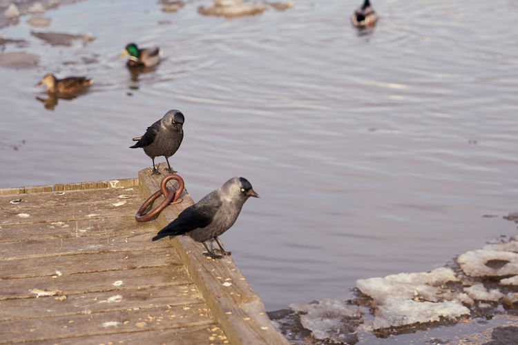 High angle view of birds perching on lake