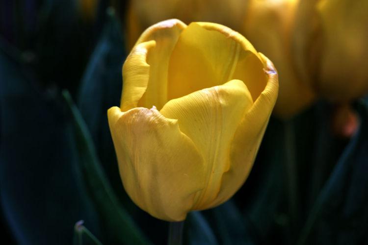 close-up yellow