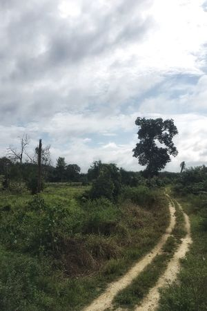 Landscape Tree Grass Field Nature Sky Day Cloud - Sky No People Tranquil Scene Tranquility The Way Forward Road Growth Beauty In Nature Outdoors Scenics