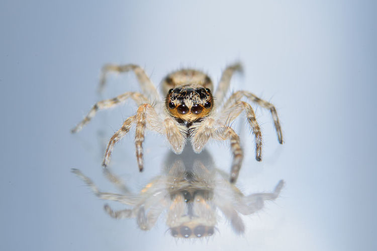 Close-Up Of Spider On Glass