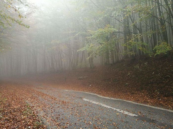 Tree Nature Fog Forest Leaf Beauty In Nature Landscape No People Outdoors Day Mist Lost In The Mist Avellino Irpinia Mount Terminio Road Road To Nowhere Roadscenes Misty Road Into The Woods Into The Forest Into The Fog