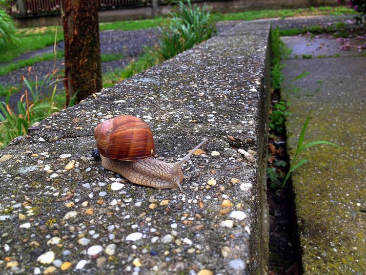 Snail Animal Themes One Animal Animals In The Wild Outdoors No People Nature