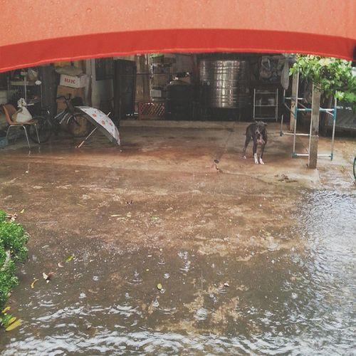 ฝนตกน้ำท่วม พนักงานต้อนรับมารอรับแต่ไกล Dog Pet Pet13