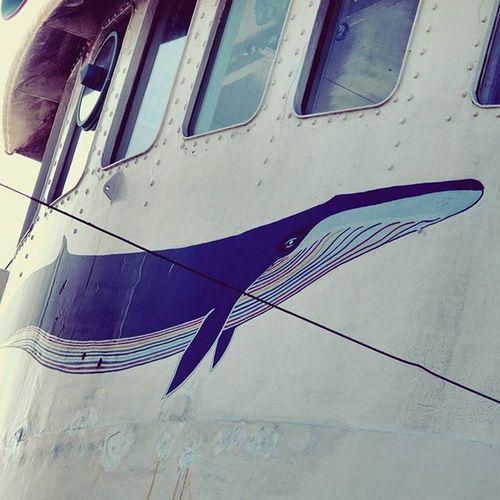 Wale Ship Netherland Amsterdam Nsdm Travel Traveler Traveling