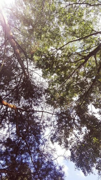 Tree Low Angle View Nature Day No People Sky Beauty In Nature Backgrounds