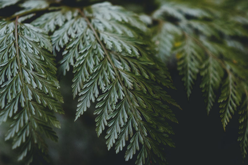 After the Rain Green Color Close-up Plant Leaf Growth Plant Part No People Pine Tree Coniferous Tree Nature Selective Focus Beauty In Nature Tree Focus On Foreground Needle - Plant Part Day Fir Tree Branch Outdoors Pinaceae Herb