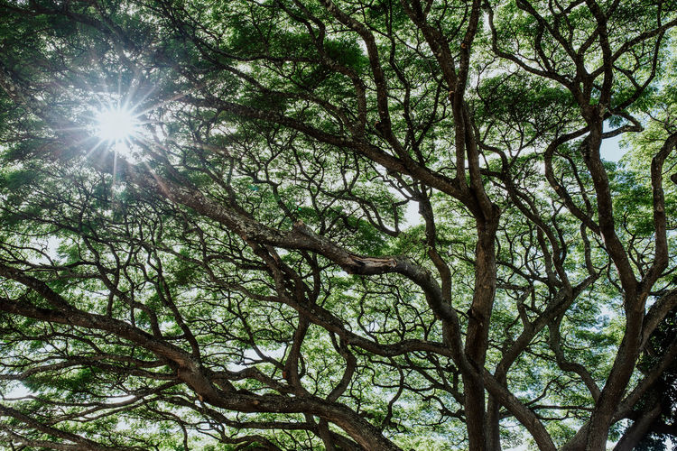 Low angle view of sunlight streaming through tree