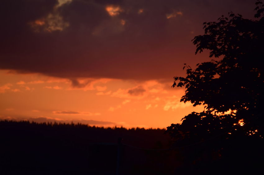 And sometimes fire is also in the sky Silhouette Sunset Tree Tranquil Scene Scenics Tranquility Beauty In Nature Sky Nature Orange Color Idyllic Outline Dark Cloud - Sky Branch Majestic Dramatic Sky Atmospheric Mood Atmosphere Cloud