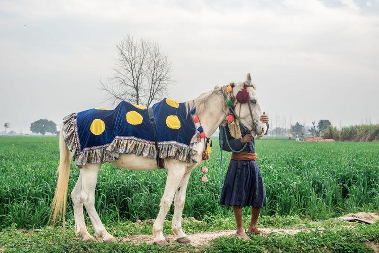 The Photojournalist - 2017 EyeEm Awards Horse Kilaraipur Punjab Festival Field Livestock Outdoors People Horse Racing Grass Green Competitive Sport The Street Photographer - 2018 EyeEm Awards