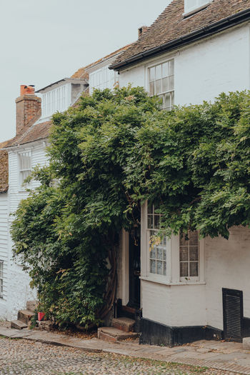 Exterior of a traditional english house in rye, east sussex, england, tree climbing over.