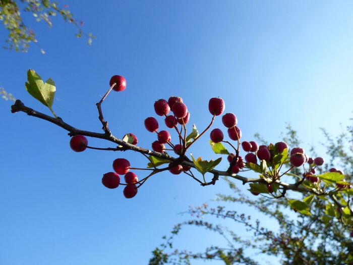 Berries Berries