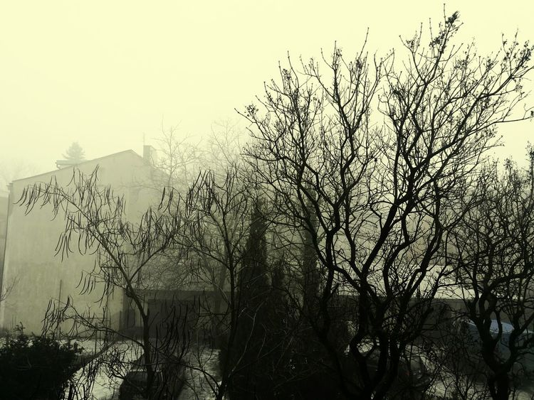 Creepy... Fog Nature Fear Of The Dark Noir Sky Beauty In Nature No People Silhouette Outdoors Sunset Day First Eyeem Photo