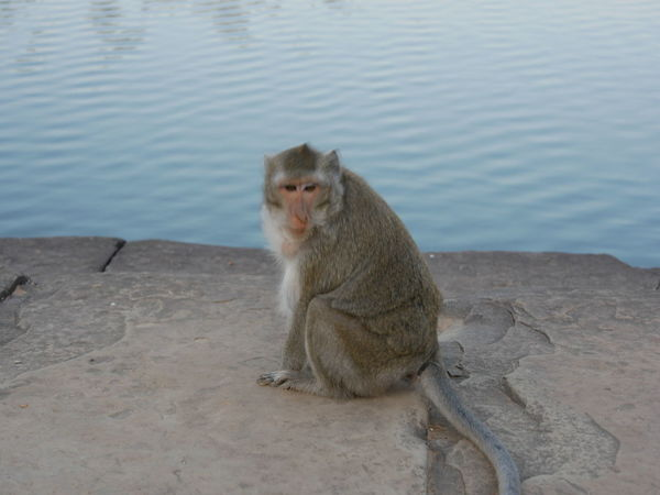 Animals In The Wild Mammal Monkey Animal Wildlife Baboon Outdoors Nature Sitting Day No People Animal Themes Water