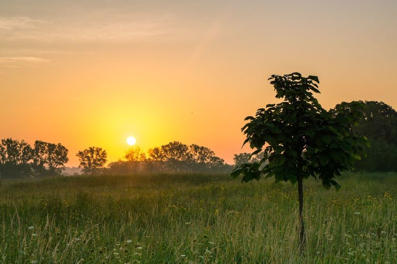 Dawn breaking over the Millenium Trail. Sunrise Morning Dawn Prairie