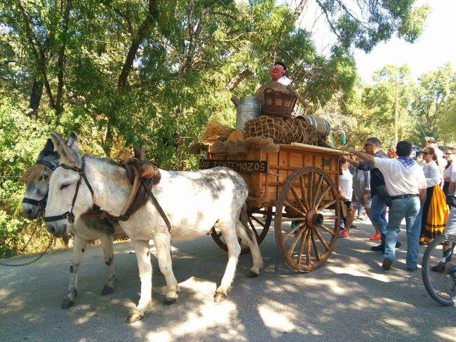 Romeria in San Lorenzo de El Escorial. DonkeyCart Domestic Animals Transportation Livestock Riding Working Animals Road People
