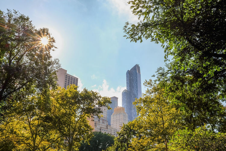 Low Angle View Of Buildings And Trees At Central Park