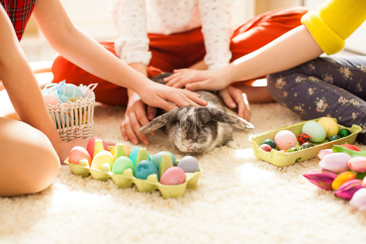 Hands stroking rabbit near easter eggs at home