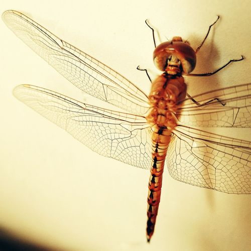Dragonfly morning call Insect Full Length Close-up Dragonfly Web Animal Leg Animal Limb Water Drop Paw