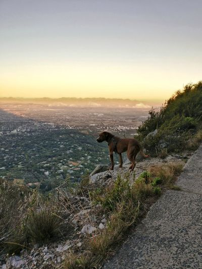I yearn for mountains that I have never seen Constantiaberg South Africa Cape Town Dog Pittbulls Dogs Of EyeEm Hiking Mountain Mountains Sunset In The Mountains Constantia Constantiaberg Sunset No People Animal Wildlife Outdoors Animals In The Wild Nature Animal Themes Sky #FREIHEITBERLIN