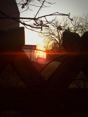 The sunrise Nature Beauty In Nature Outdoors EyeEmNewHere Minimalist Architecture Spaß Am Leben  Spaß Am Leben  Clear Sky Sunrise Silhouette Sun No People Sunlight Tree Sky Silhouette Nature Germany🇩🇪 GERMANY🇩🇪DEUTSCHERLAND@ Celle My First Photo On EyeEm  No Flash Architecture Germany 🇩🇪 Deutschland Tree My First Photo On EyeEm  The City Light