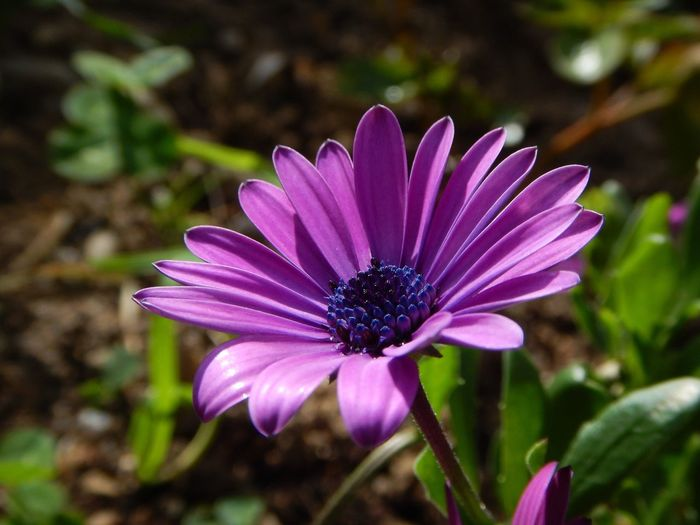 Beauty In Nature Day Flower Focus On Foreground Fragility Nature No People Outdoors Petal Plant Pollen Purple Selective Focus