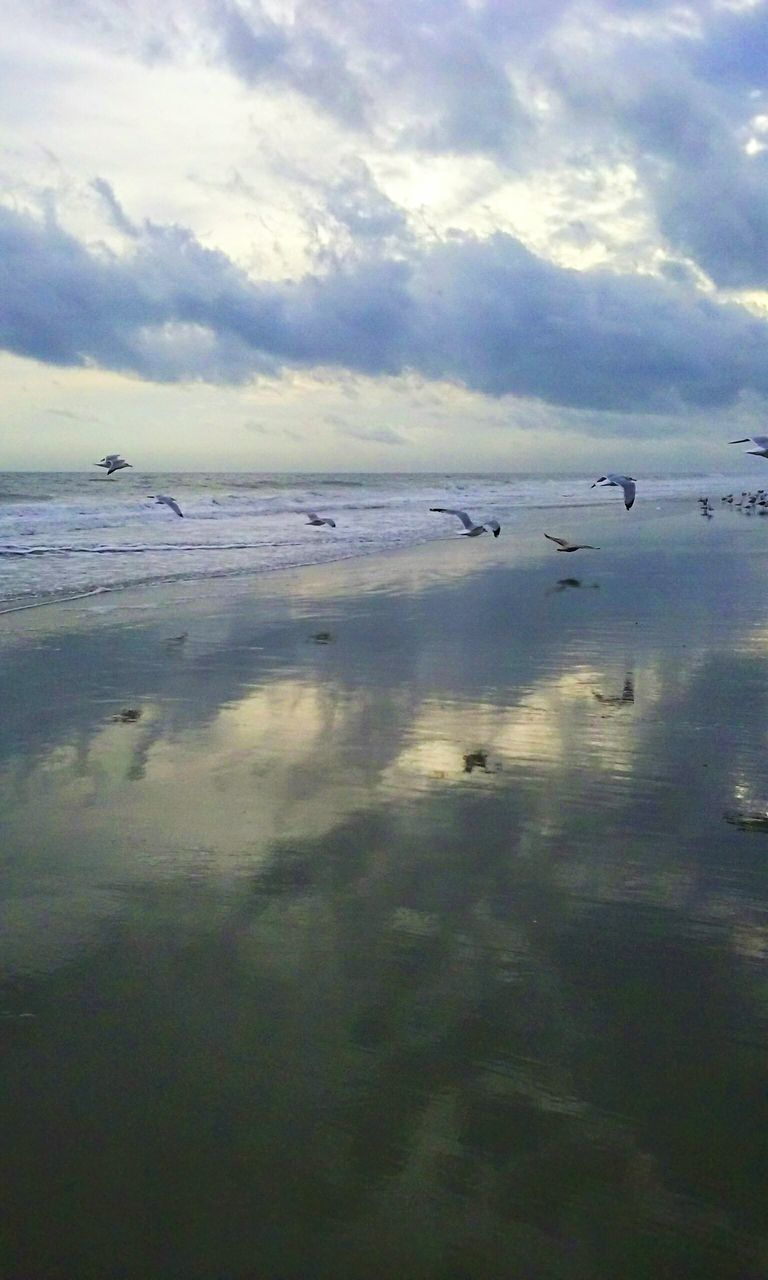 water, sea, sky, reflection, cloud - sky, nature, tranquility, no people, beauty in nature, outdoors, scenics, flying, day, bird