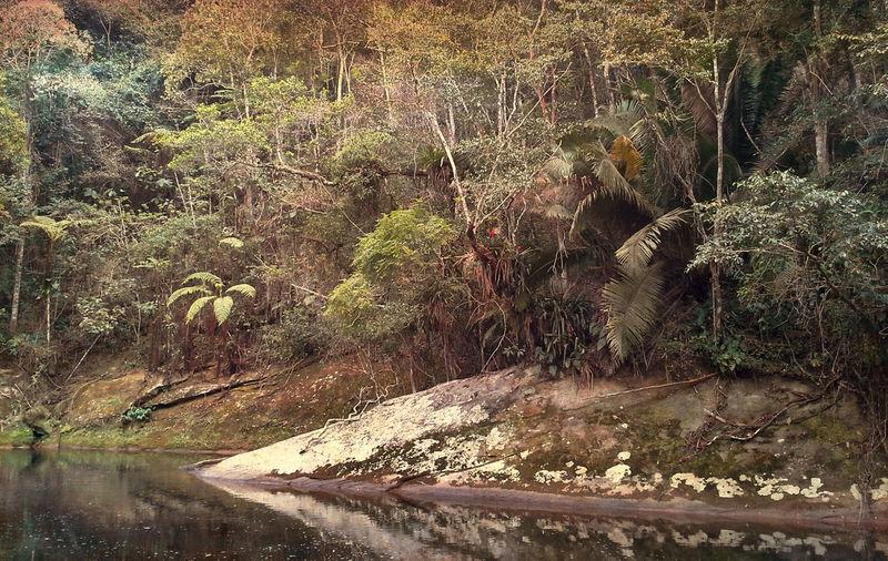 Day Forest Lidice Nature Rio Claro Rio De Janeiro River River Collection Tranquil Scene Tranquility Tree Samsung Beam Lídice - Rio Claro - RJ Brasil ♥ Brasil 🇧🇷