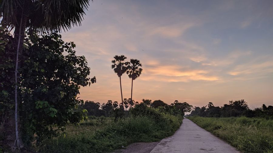 Road amidst plants and trees against sky during sunset