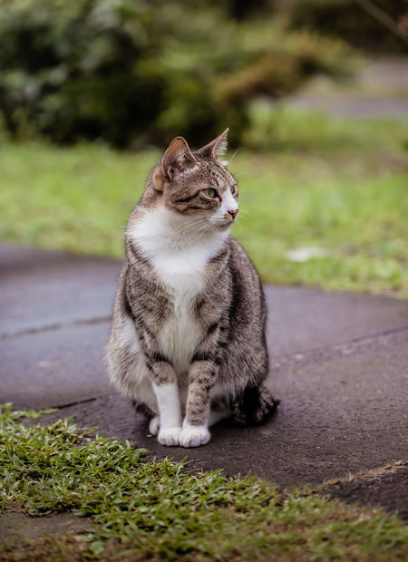 Lost in Houtong cat village, New Taipei City Animal Themes Cat Village Day Domestic Animals Domestic Cat Feline Full Length Houtong Cat Village Mammal New TaipeiCity No People One Animal Outdoors Pets Sitting Tabby Cat Taipei Taiwan Yawning