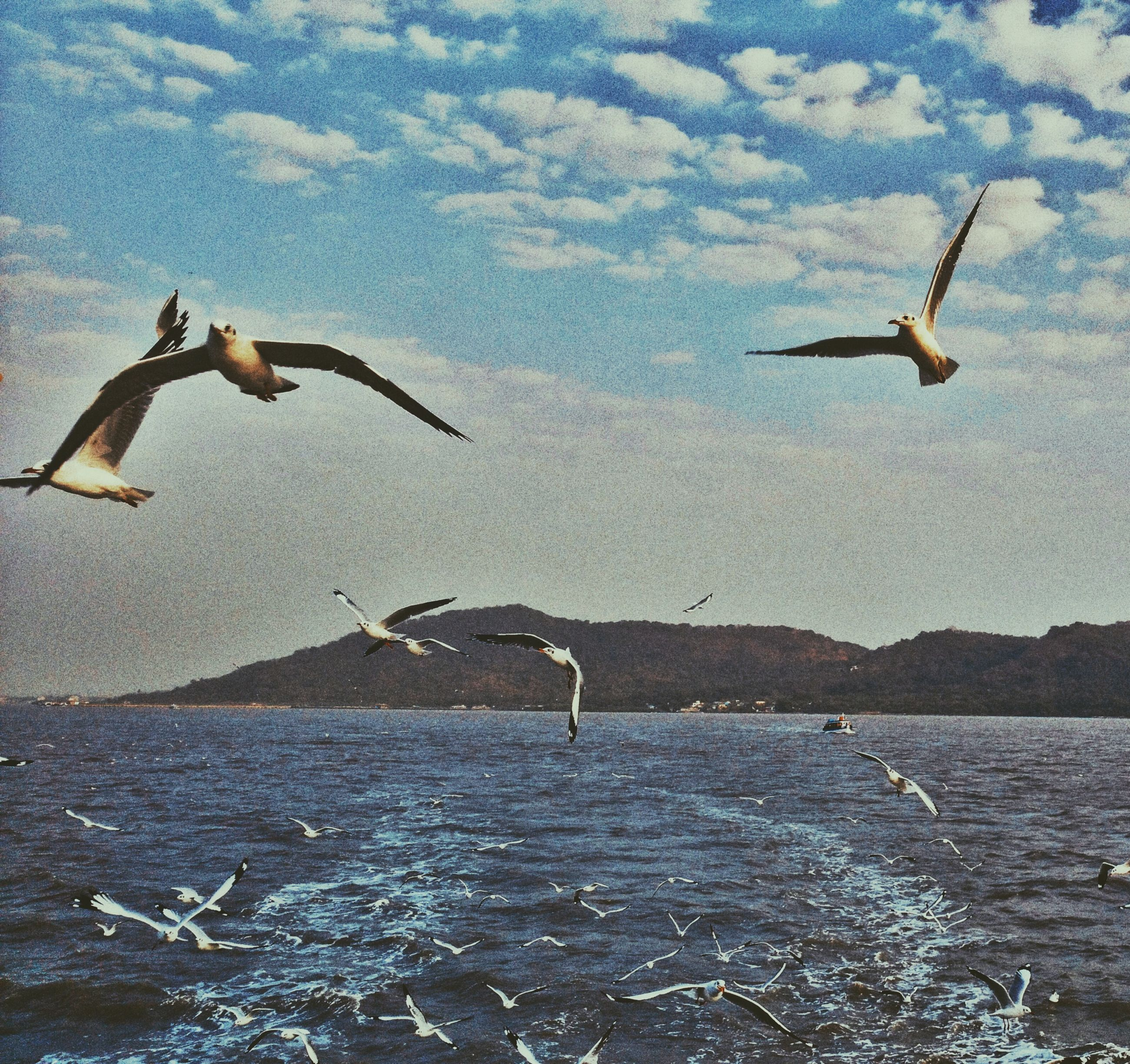 flying, mid-air, water, sky, sea, bird, spread wings, cloud - sky, transportation, seagull, nature, leisure activity, day, travel, jumping, motion, outdoors, beach