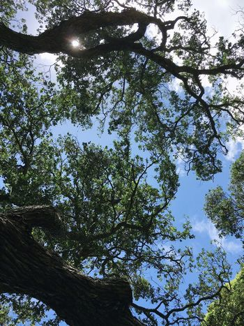 I'm going home now Tree Low Angle View Nature Branch Growth Day Beauty In Nature Sky Leaf