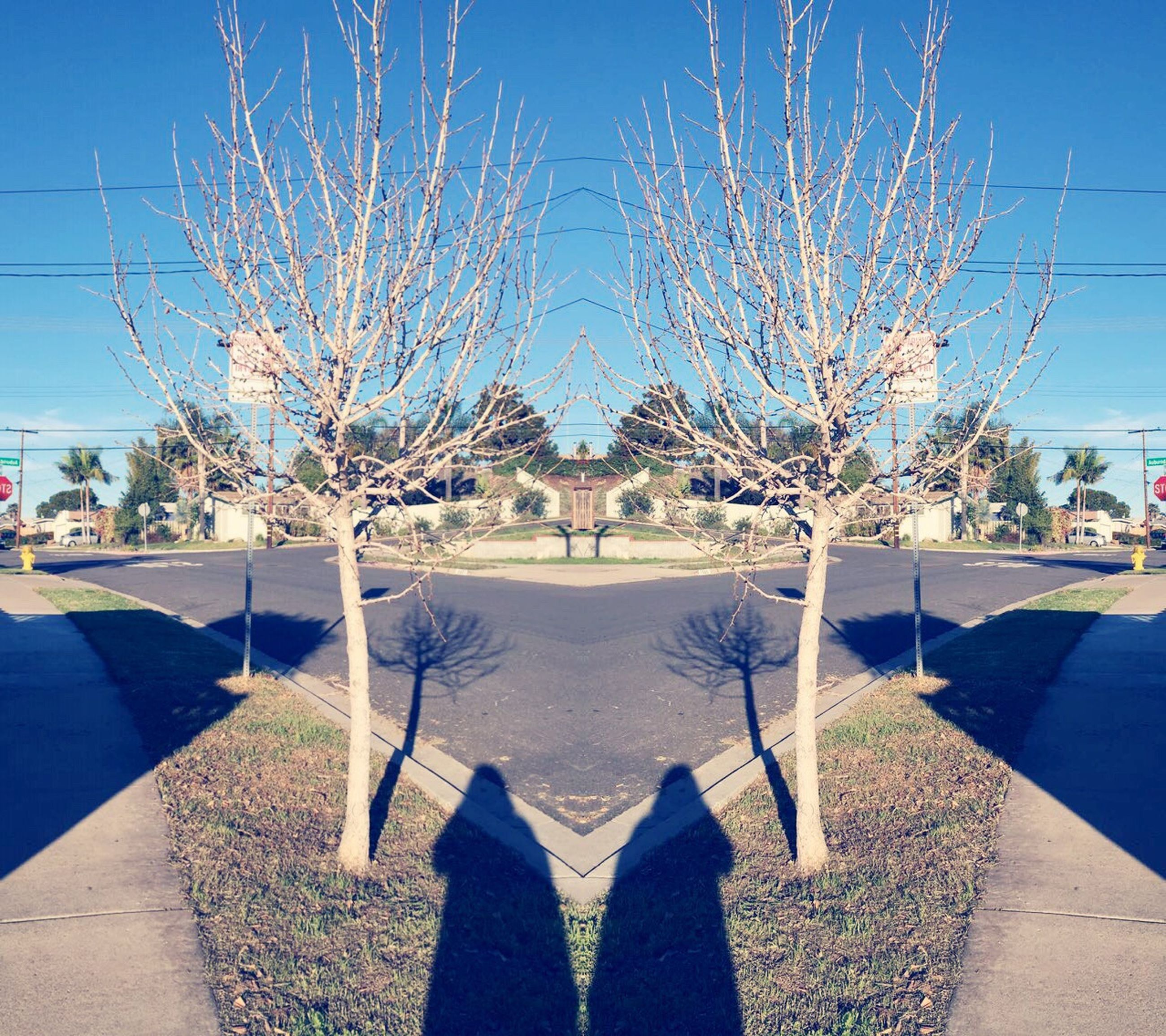 blue, bare tree, tree, building exterior, built structure, shadow, architecture, clear sky, sunlight, sky, branch, day, outdoors, footpath, nature, city, swimming pool, grass