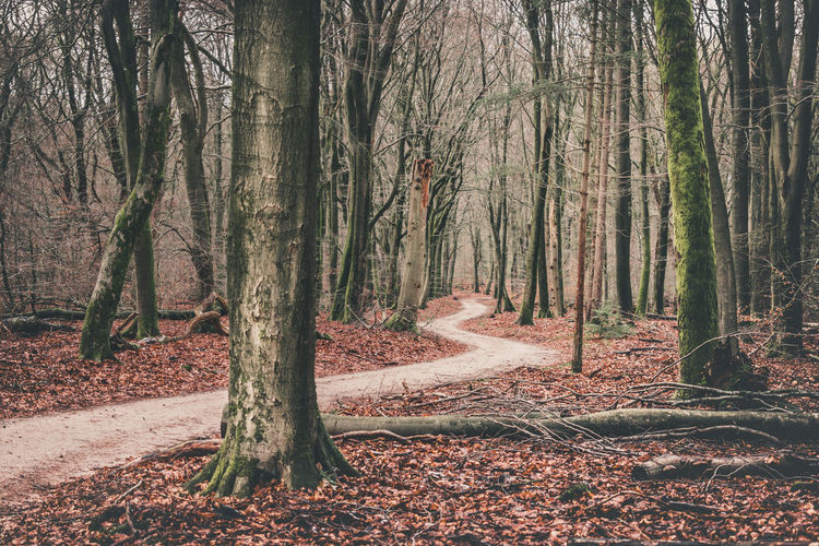 Speulderbos Autumn Beauty In Nature Day Forest Landscape Leaf Nature No People Outdoors Scenics Tranquil Scene Tranquility Tree Tree Trunk